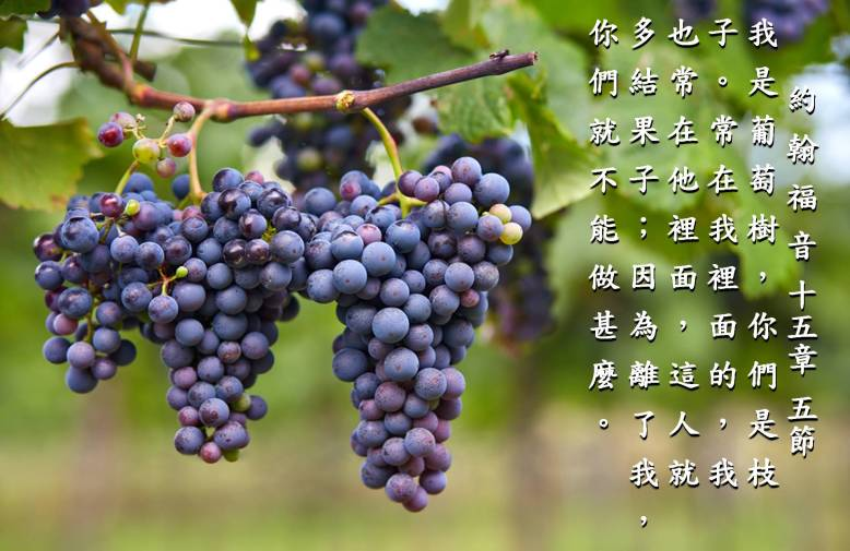 grape - home